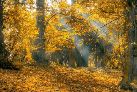 autumn-2444046_960_720